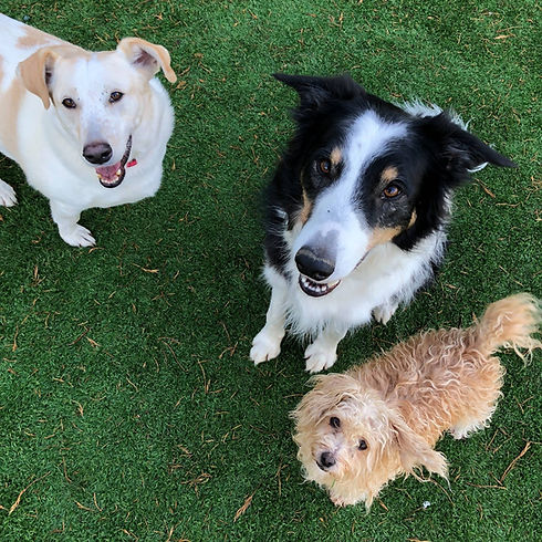 Charlie, Tricksie, Timmy.JPG