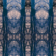 Tree studies i pattern.jpg ~ These images are inspired by nature walks along the River Tyne in Haddington during the second lockdown in January/February 2021. I have been selling them as Prints (Tree Studies i and v) and as Art Cards through the Artist Support Pledge. If you are interested in purchasing, please get in touch.