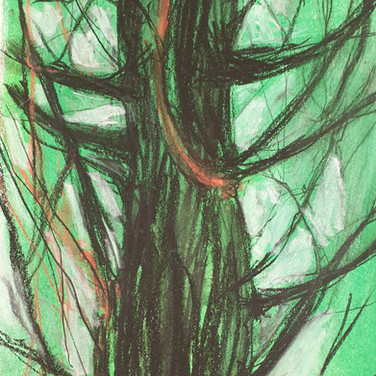 Tree study  -pastel on paper garden Project April 2020