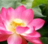 spiritualfestival-lotuscuore.jpg