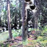 Naturelements Art Creatures Objekte Collage