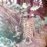 Nature Art Creatures Objekte