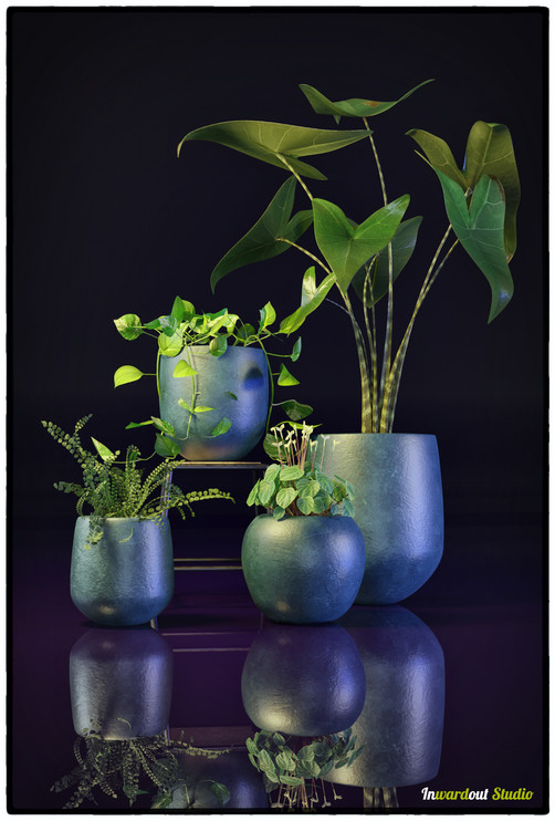 plant combo_01.jpg