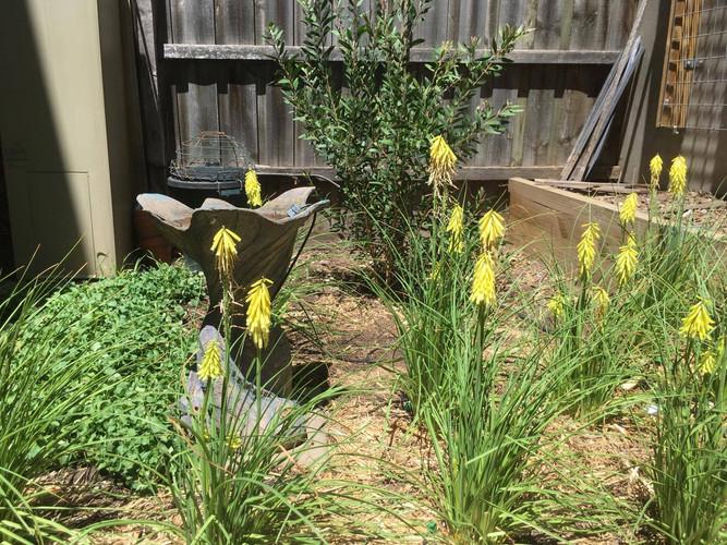 Garden coming to life