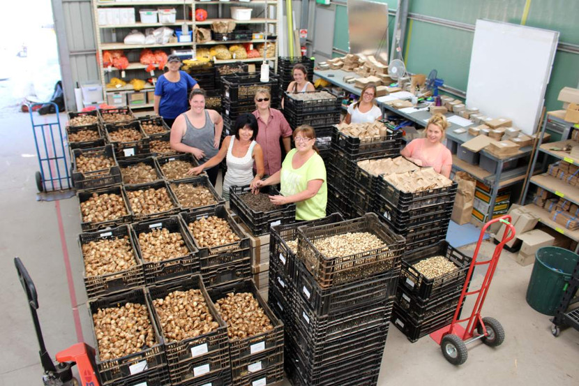 Bulb Packing for despatch - Diggers Club