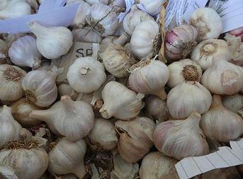 Garlic_500-375.jpg