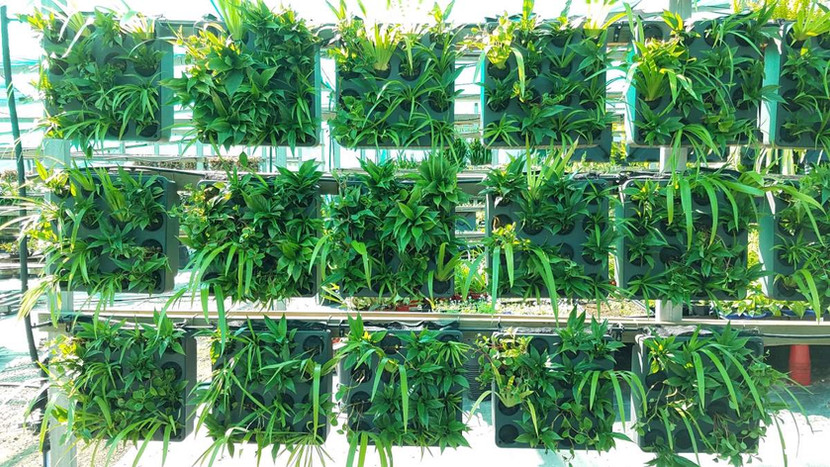 Green wall modules growing on in Junglef