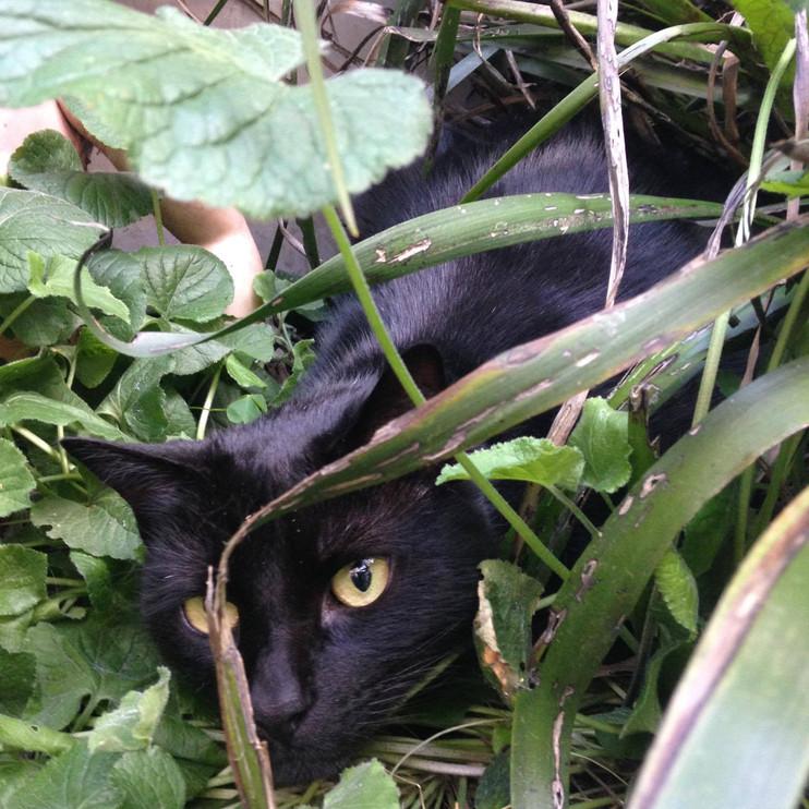 The cat in his new garden