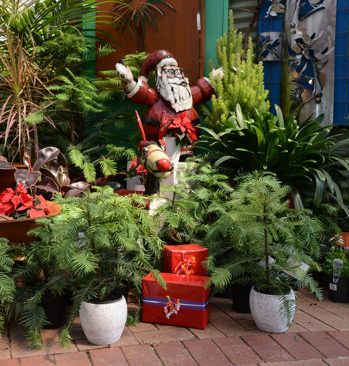 Wollemi Pines with Father Christmas - Za