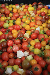 Tomatoes and garlic.JPG