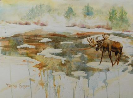 Moose Drizzle