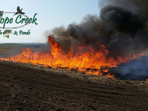 Prescribed Burning Grasslands