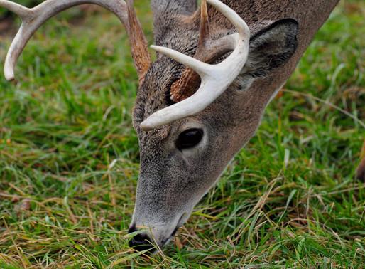 Neighborhood CO-OP's Equal Better Hunting
