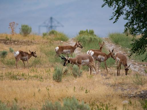 Scouting Antelope Water Holes