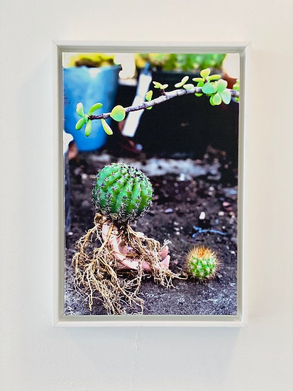 PROJECT ECHINOPSIS | A SIP OF LIFE #4