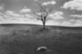 900x600_circuts_Untitled (79).jpg