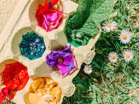 Chasse aux couleurs dans le jardin
