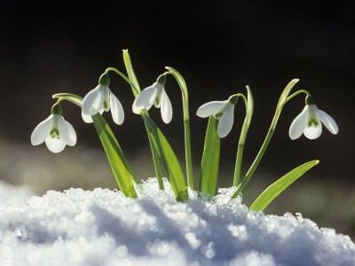 Imbolic - The Esoteric Beginning of Spring