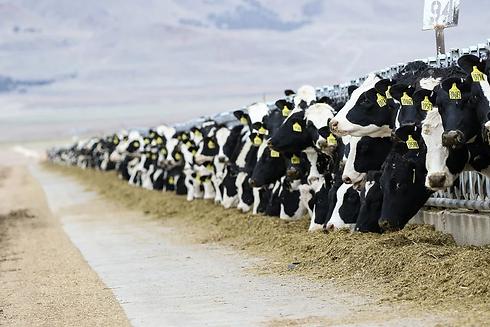 cows-3576078_960_720.webp