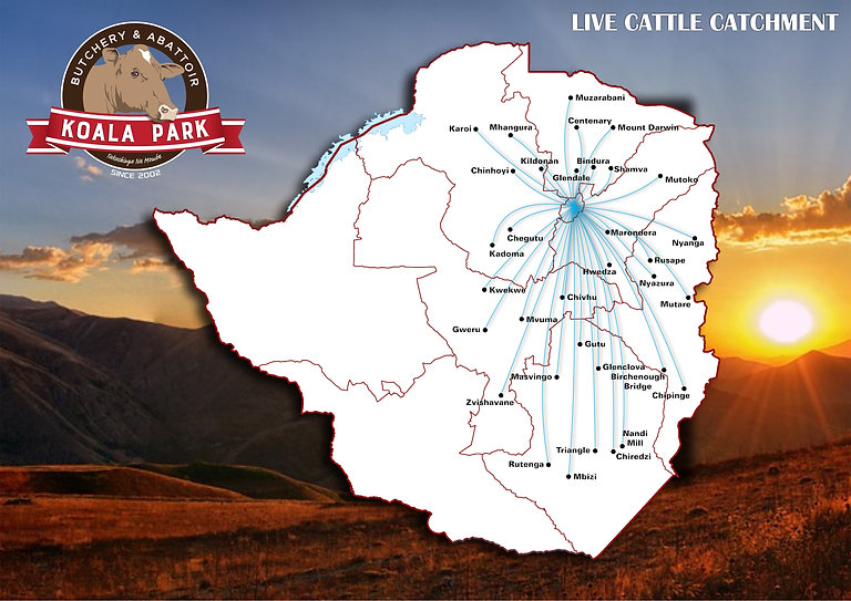 Live Cattle Catchment