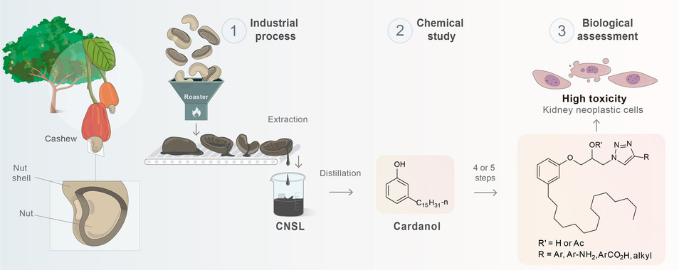 Graphical abstract - Sustainable Chemistry and Pharmacy - Elsevier