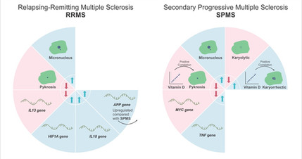 Figura de Artigo // Journal of Molecular Neuroscience