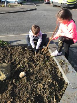 100 Bulbs - Daffodils, Tulips, Bluebells