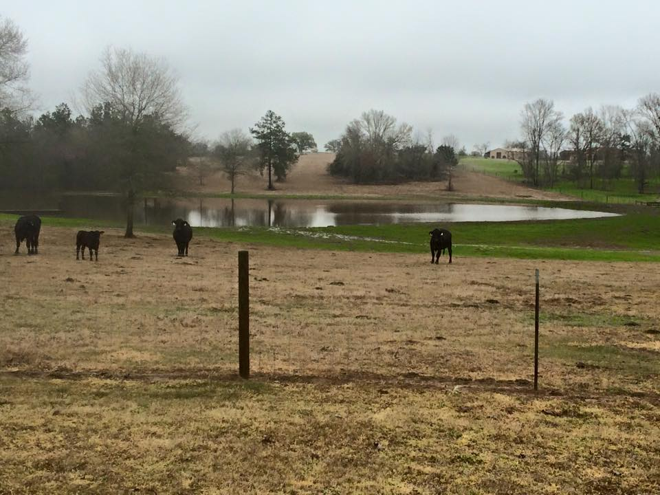 Pond Repair Montgomery, TX