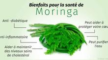 Commandez Ici Du Moringa Pour Votre Santé