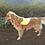 Thumbnail: Gilet jaune pour chien