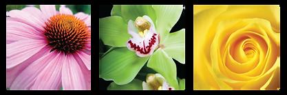 flowerShield_complexSQ-1-768x256 2.png