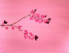 Spring feeling (sold)