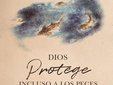 DIOS PROTEGE INCLUSO A LOS PECES