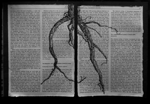 root bw.jpg