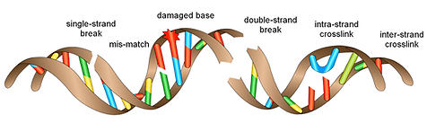 DNA breakage 2.png