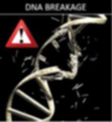 DNA Breakage.JPG