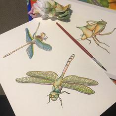 watercolor dragon-fly