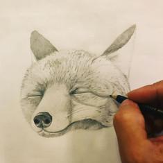 Sketch - fox