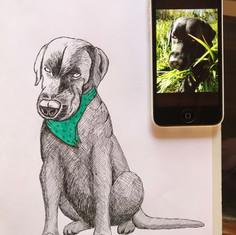 Sara's dog