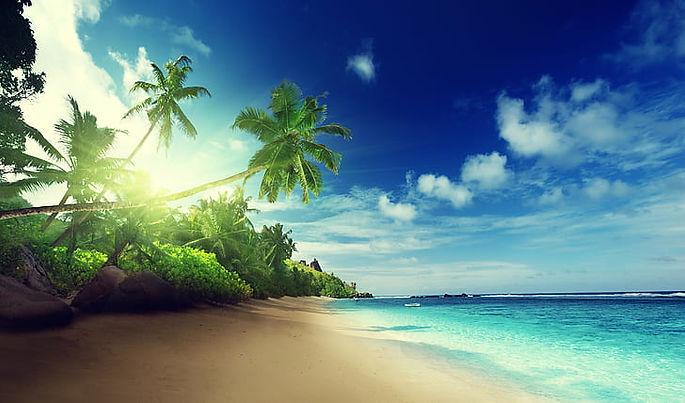 beach-palm-trees.jpg