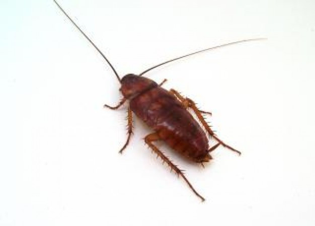 cockroach--roach_19-107972.jpg