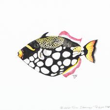 Triggerfish Study 2