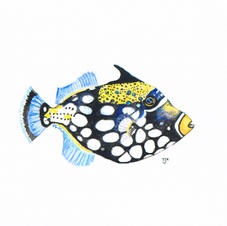 Triggerfish Study 1