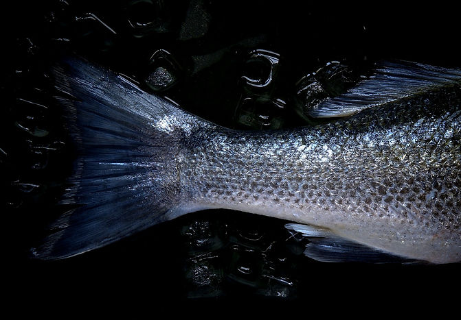 fish_tail_fresh_food_iced_food_fresh_fis
