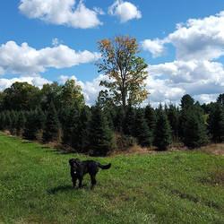 #treefarm #scout #ilovemyjob #imisssummer #beautifulsky #beautifulday
