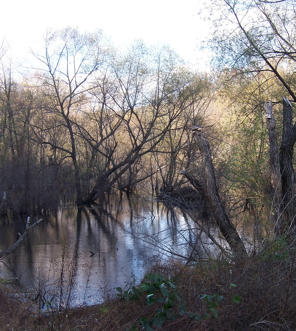 Tugaloo Swamp.jpg