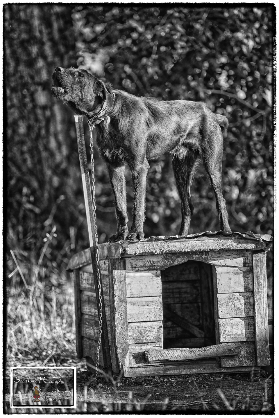 Dog on a tin roof