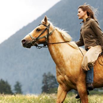 Gold Saddle: 2021 Fall Festival Sponsor Registration ($750)