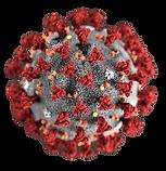 CoronavirusCDC_edited_edited.png