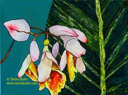 Pink Porcelain Lily